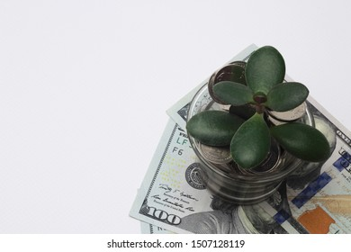 Top view, close-up on a money tree that grows in a glass piggy bank filled with coins. Under them are the money of the United States, dolars. Isolated Open Space