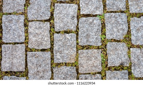 Top view of cobblestone with green moss growing in between the gaps, close up