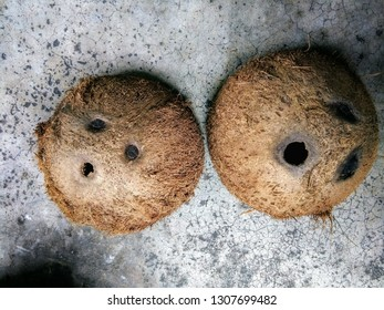 Top view of Coconut shells with brown coirs on dirty & grunge cement or concrete floor background, copy space. Tropical summer dried coconut fruit can make a dishware, eco-friendly materials concept