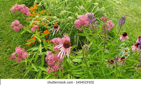 Top view of colorful Butterfly Wildflower garden with a variety of native plants and flowers on front lawn