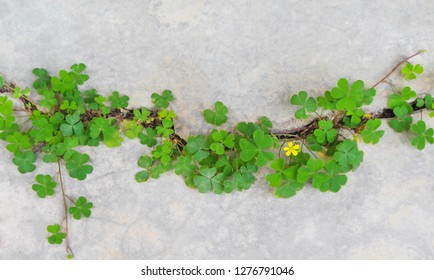 Top view colorful green plants with yellow flower patterns growing  in concrete cracks floor, nature background