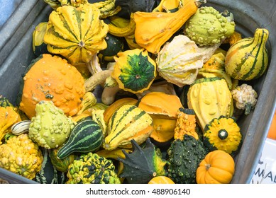 Top view colorful ornamental pumpkins and gourds as fall decoration background. Varieties of spotted and striped gourds and squashes in different color and shape from autumn harvest. Holiday wallpaper