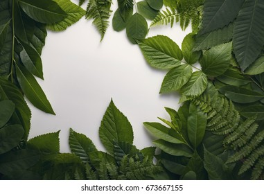 top view of creative layout foliage leaves with paper card note. top view. Nature concept