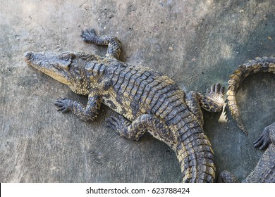 Top view of the crocodile Farm ,Thailand.