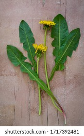 Top view of dandelion plant