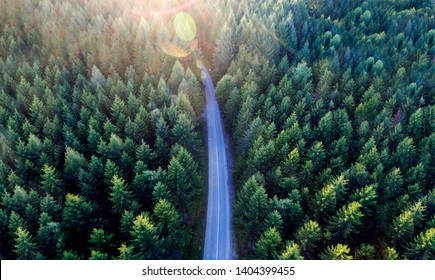 Top view of dark green forest landscape in winter. Aerial nature scene of pine trees and asphalt road. Countryside path trough coniferous wood form above. Adventure travel concept background.