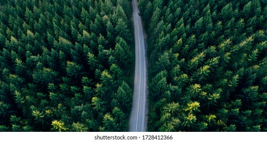 Top view of dark green forest landscape wallpaper art. Aerial nature scene of pine trees and asphalt road banner design. Countryside path trough coniferous wood form above. Adventure travel background