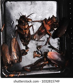 top view of dead cockroaches