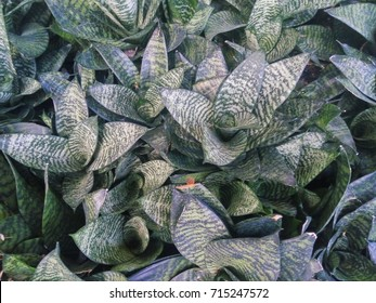 top view of diagonal green leaves
