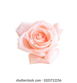top view die cut of pink rose isolated on white background