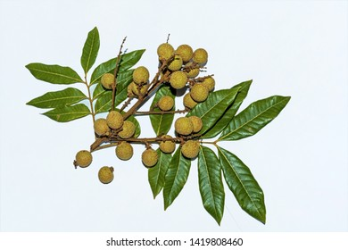 Top view of Dimocarpus longan.A bunch of Longan fruits with green leaves on white isolated background