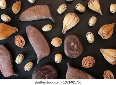 Top view of dried garlic, Chinese honey locust seeds, St. Thomas beans, peach and plum bones for floristic design on black wooden board against a low key background. Choose a focal point.