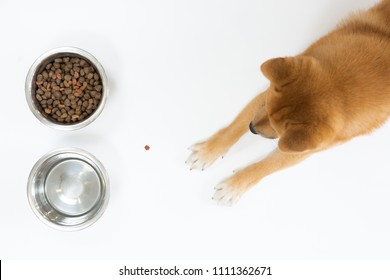 Top view of dry dog food in bowl and red Shiba inu dog looking and waiting to eat, on white background, flat lay