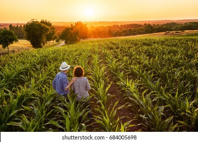 Top view. A farmer and his wife standing in their cornfield at sunset