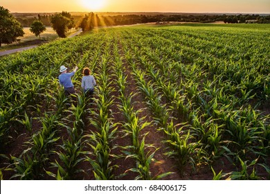 Top view. A farmer and his wife standing in their cornfield at sunset. They are examining their crops