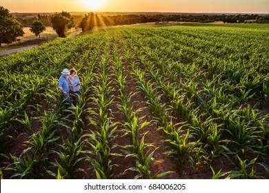 Top view. A farmer and his wife in their cornfield at sunset examine their crops on a digital tablet