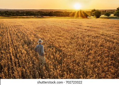 Top view. A farmer standing in his wheat field at sunset. He is watching his crops.