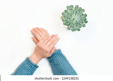 Top view of female hands with clean nude manicure on the white background. Hands near green flowerpot succulent.