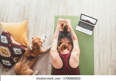 Top view at fit sporty healthy woman sit on mat in Paschimottanasana pose, doing breathing exercises, watching online yoga class on laptop computer. Her beagle dog keeping company next on the floor. - Shutterstock ID 1700880820