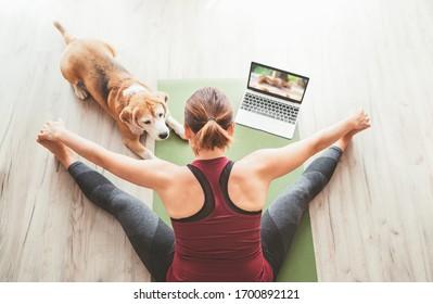 Vista de primera en forma mujer deportiva sana sentada en el tatami en la pose de Upavistha Konasana, haciendo ejercicios respiratorios, viendo clases de yoga en línea en el ordenador portátil. Su perro de remolacha junto al suelo.