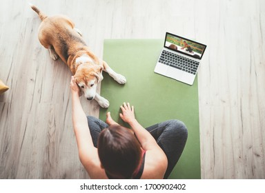Top view at fit sporty healthy woman sitting on yoga mat, watching online yoga class on laptop computer and petting her beagle dog keeping company next on the floor.