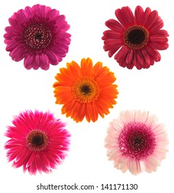 top view of five gerbera flowers of various colours red, violet, pink and orange isolated on white background