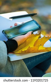 top view. Flat lay. girl holding a phone in her hand. white notebook on your lap. Autumn woman drinking coffee. yellow maple leaves on a park bench. Attractive woman using mobile phone in autumn park