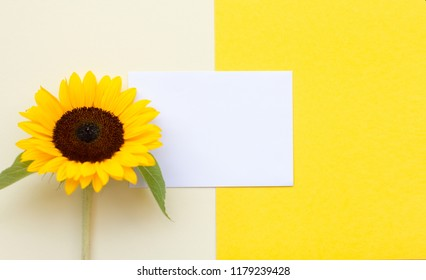 Top view flat lay picture with notepad as mockup for your design and flower on yellow background. Copyspace for your text.