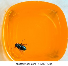 Top view of a fly in a glass of orange juice, on orange background.
