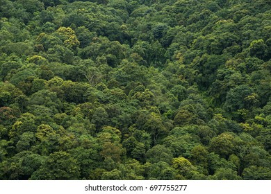 Top view of forest with clounds.