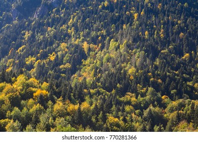 Top view of forest in the fall