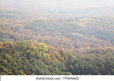 Top view of forest in the fall with haze
