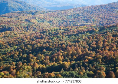 Top view of forest valley in the fall
