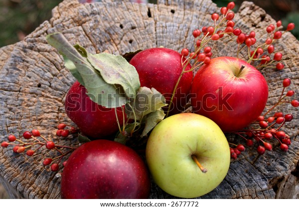 Top view of four red apples arranged around one green one on a tree stump.