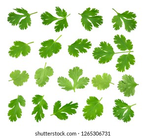 Top view of fresh green parsley leaves isolated on white background.