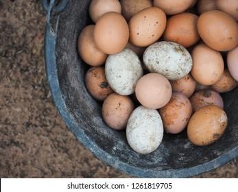 Top view of freshly kept eggs in basket.