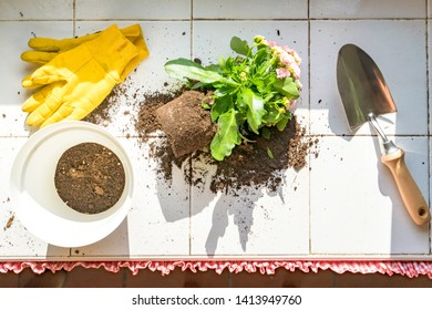 top view of garden tools to transplant plants with manure in the kitchen of a house. concept of ecology and sustainability
