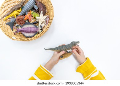 Top view of a girl's hands playing and sorting figures of prehistoric animals in the Montessori school. Plastic miniature dinosaurs resource use concept for teaching children.