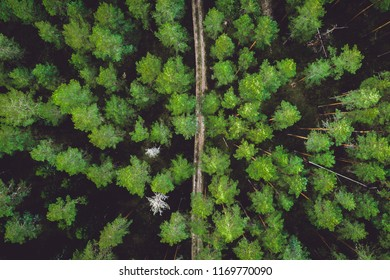 Top view of gravel road in the forest. Aerial photo.