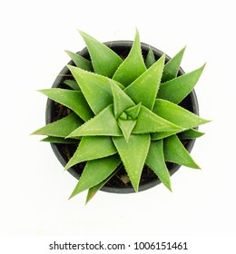 Top view green aloe vera planted in pots isolated on white backgrounds, suitable for design work, cactus, or succulent