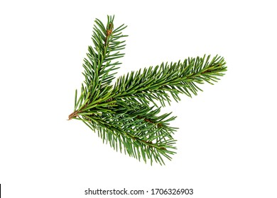 Top view of green fir tree spruce branch with needles isolated on white background - Shutterstock ID 1706326903