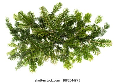 Top view of green fir tree spruce branch with needles isolated on white background . Pine branch. Christmas fir.