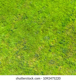 Top view of green grass, background, texture