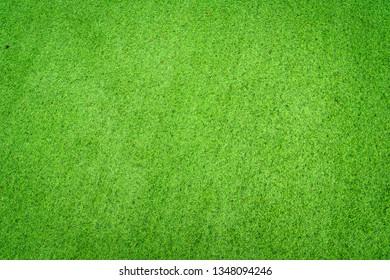 Top View Green Grass Texture Background