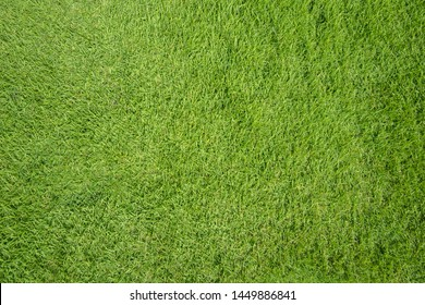 Top view of green grass texture background
