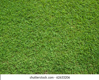 Top View of Green Grass Texture and surface