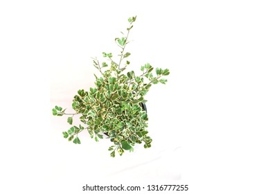 Top view of green house plant isolated on white background