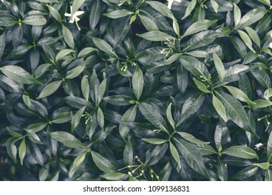 Top view of green leaves for background