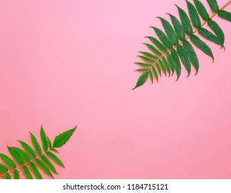 Top view. Green leaves on a pink background.