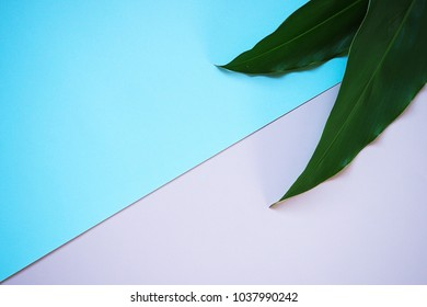 Top view of green leaves over color background.
